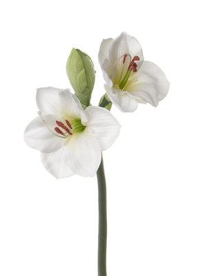 Amaryllis 60cm, wit
