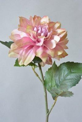Dahlia, roze