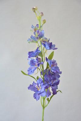 Delphinium, blauw-paars, 60cm